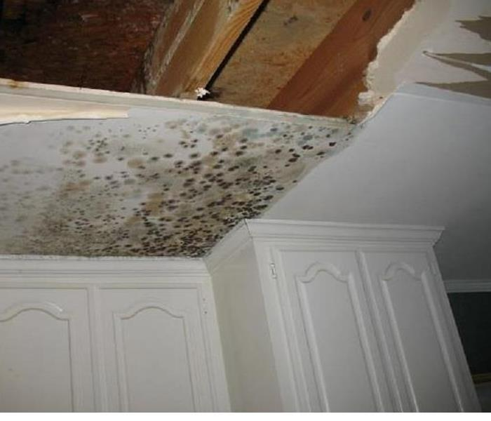 Mold Infestation in Lexington, Sc.
