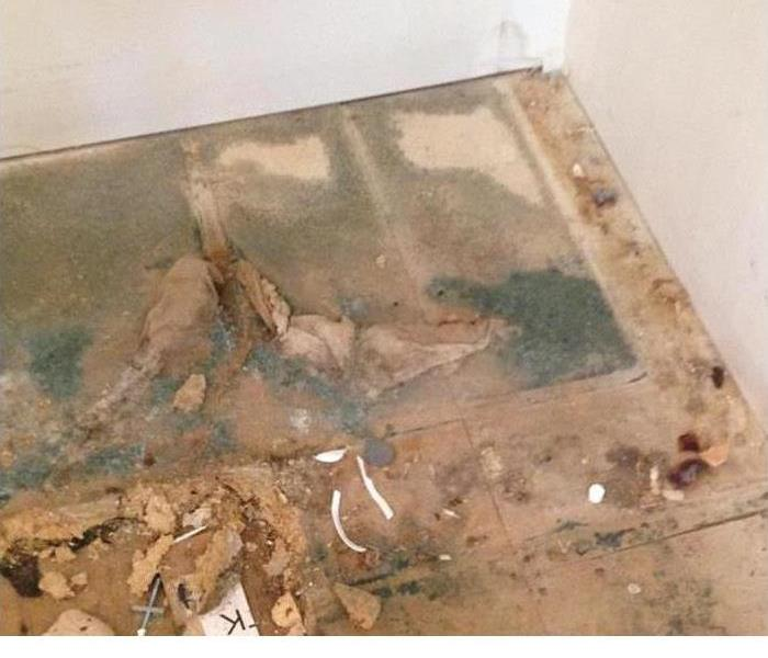 Mold Remediation in Cayce/ West Columbia