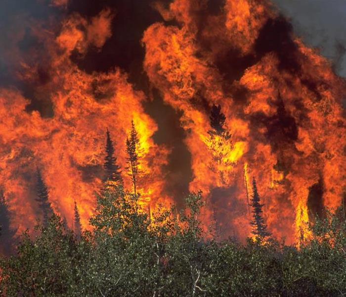 Fire Damage Wildfire Safety Tips