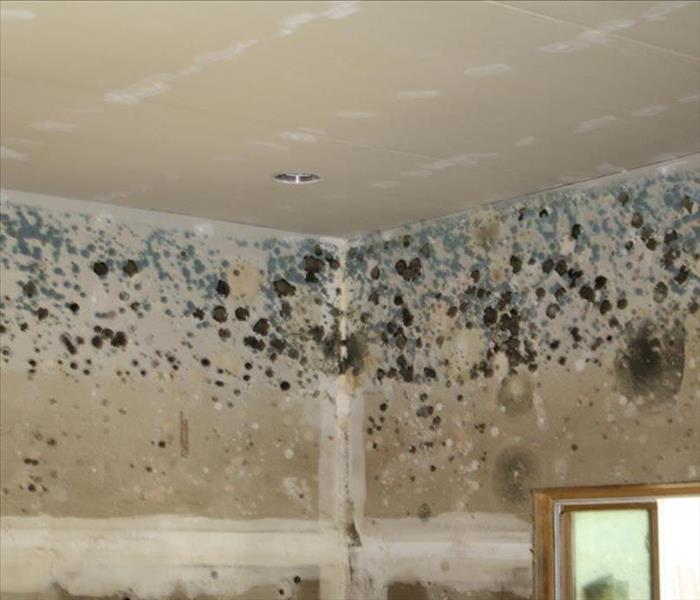 Mold Remediation Does Homeowners Insurance Cover Mold?