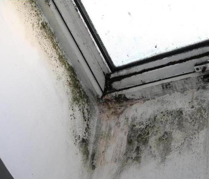 Mold Remediation Can Mold Be Contained During Remediation?