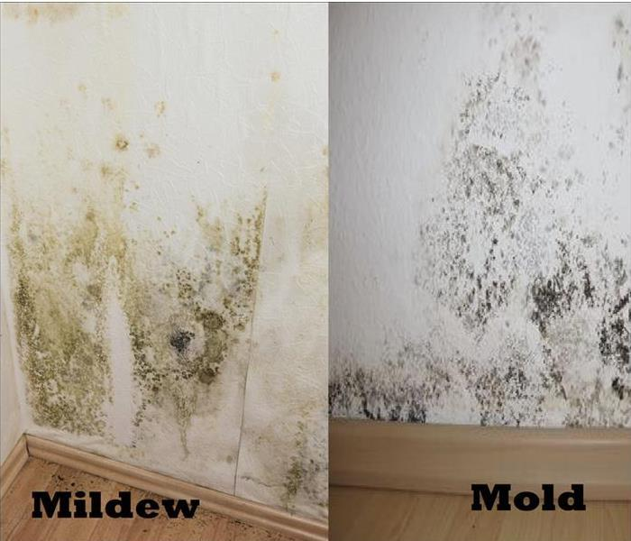 Mold Remediation Mold or Mildew